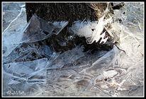 Eis, Wald, Winter, Fotografie