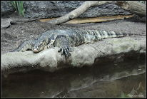 Reptilium, Zoo, Krokodil, Fotografie