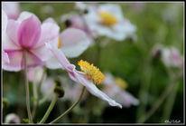 Garten, Pflanzen, Blüten rosa, Sommer