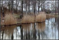 Spiegelung, See, Baum, Landschaft