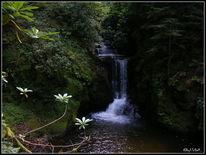 Wasserfall, Schwarzwald, Quelle, Fotografie