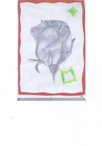 Zeichnungen, Pflanzen, Rose