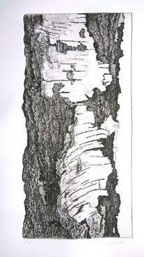 Baum, Schneider, Radierung, Birken