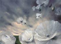 Blumen, Wiese, Flüchtig, Weiß
