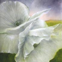 Weiß, Hell, Blumen, Mohn