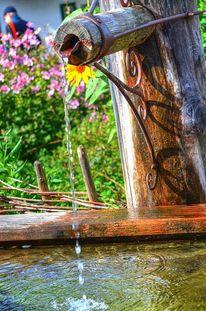 Blumen, Wetter, Wasser, Brunnen
