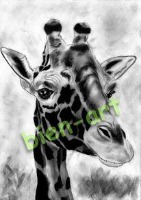 Urlaub, Urwald, Dekoration, Zebra
