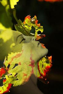 Gesicht, Herbst, Profil, Blätter