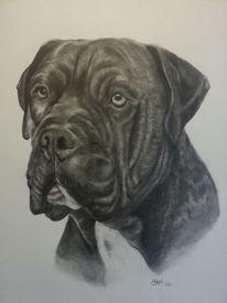 Schwarz, Tierportrait, Modern, Hund