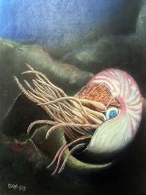 Meer, Ozean, Wildtiere, Krake