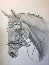 Tierportrait, Pferde, Grau, Bleistiftzeichnung
