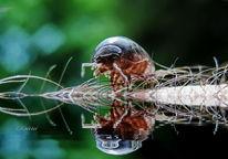 Krebs, Insekten, Natur, Fotografie