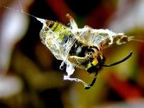 Wespe, Beute, Tiere, Insekten