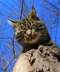 Katze, Natur, Szene, Kater