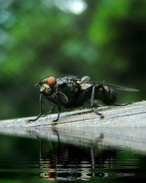 Makro, Natur, Fliege, Insekten