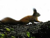 Tiere, Wildtier, Natur, Eichhörnchen
