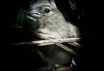 Vogel, Makro, Momentaufnahme, Tiere