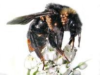Wildtier, Befall, Tiere, Insekten