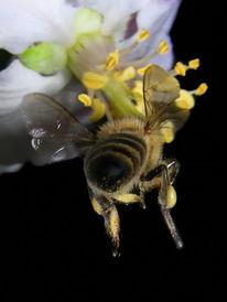 Tiere, Insekten, Biene, Wildbiene