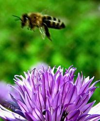 Blumen, Natur, Insekten, Biene