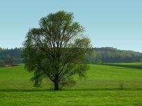 Grün, Baum, Allein, Feld
