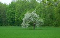 Allein, Gras, Baum, Solitär