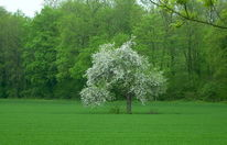 Grün, Feld, Allein, Gras