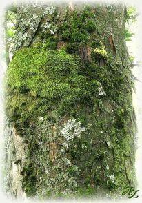 Wald, Stamm, Rinde, Baum