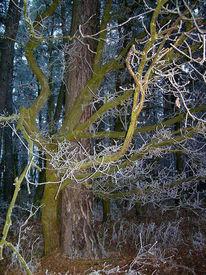 Umarmung, Wald, Baum, Fotografie