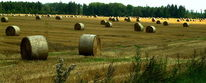 Ernte, Natur, Feld, Stroh