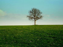 Allein, Gras, Solitär, Wiese