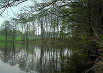 Teich, Frühling, Wasser, Regen
