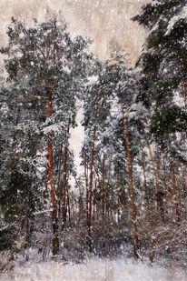 Schneegestöber, Wald, Fotografie