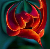 Blumen, Tulpen, Fotografie