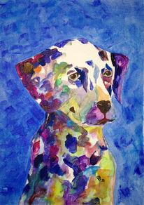 Tiere, Dalmatiner, Blau, Bunter hund