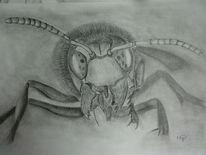 Hornisse, Tiere, Zeichnung, Bleistiftzeichnung