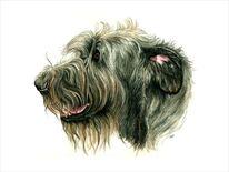 Irish wolfhound, Hund, Windhund, Hundekopf