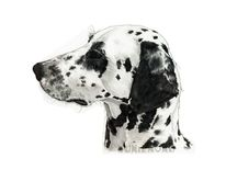 Hundeportrait, Dalmatiner, Aquarell, Tiere