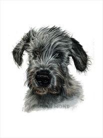 Welpe, Irisch, Hundeportrait, Wolfhound