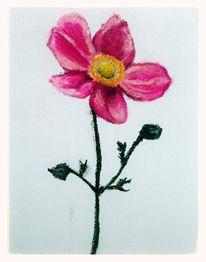 Blumen, Blüte, Pflanzen, Zeichnungen
