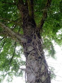 Äste, Baum, Wurzel, Fotografie