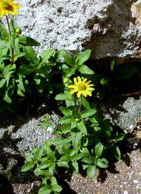 Pflanzen, Blumen, Stein, Fotografie
