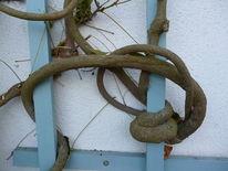 Knoten, Baum, Wuchs, Fotografie