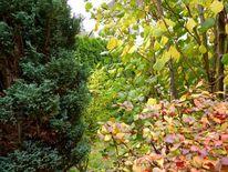 Äste, Baum, Blätter, Herbst
