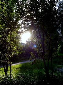 Grün, Morgen, Wald, Sonne