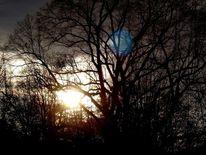 Wald, Licht, Sonne, Fotografie