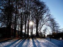 Sonne, Himmel, Baum, Holz