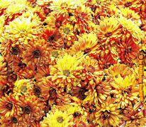 Herbst, Blumen, Blüte, Fotografie