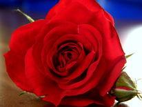 Rot, Türkis, Hochzeit, Stern