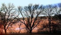 Natur, Landschaft, Baum, Pflanzen